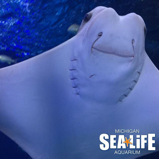 Via @sealifemichigan